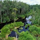 Regenwald Tanjung Puting Nationalpark, Borneo, Indonesien