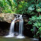 waterfall in rainforest, Asa Wright Nature Reserve, Trinidad, West Indies
