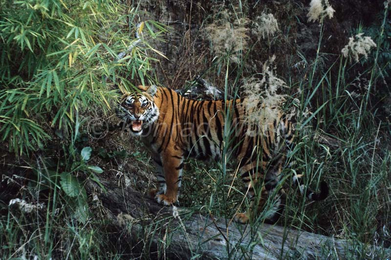 Regenwald Moments Of Nature Konrad Wothe