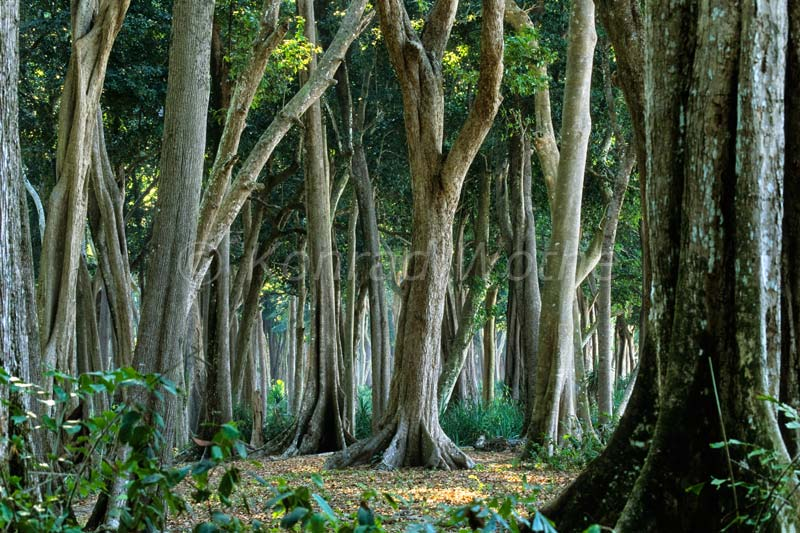 about forest in hindi language The word forest derived from greek word 'foris' means outside the dense growth of trees, together with other plants, covering an area of land and science concerned with the study, presentation and management of forests is forestry.